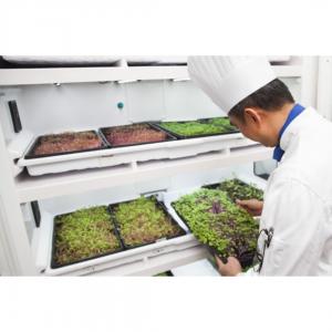 Коммерческий гроубокс для выращивания микрозелени Урбан Культиватор