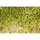 Люцерна (Альфальфа) для проращивания, 100 г