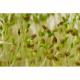 Семена брокколи для проращивания, 100 г
